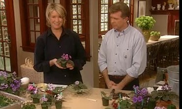 Plant Of The Week: African Violet