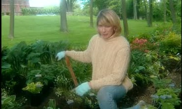 Planting Hostas in a Shade Garden