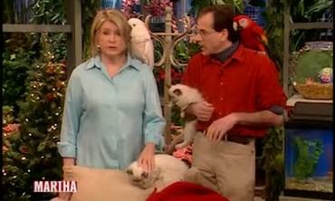 Holiday Pet Tips with Marc Morrone