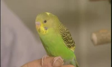 Parakeet History with Marc Morrone