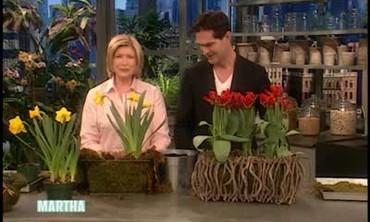 Spring Flowers with Rupert Everett