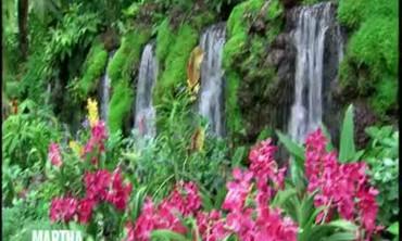 Tour of Singapore's Botanic Gardens