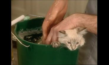 Bathing a Kitten with Marc Morrone
