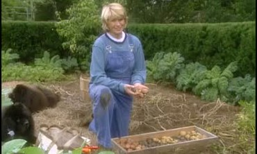 How to Harvest Potatoes From Your Garden