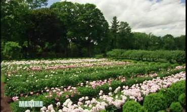 Tour of Martha Stewart's Peony Garden