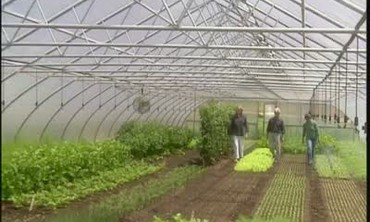 Visiting Four Season Farm Greenhouse
