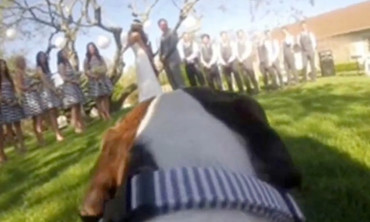 A Dog's Eye View of a Wedding Ceremony