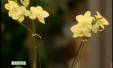 .How to Grow Orchids and Care For Them
