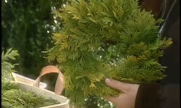 How to Make Small Arborvitae Wreathes