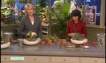 How To Plant a Tabletop Cactus Garden