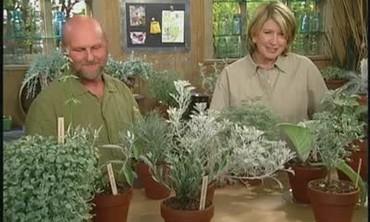Silver Leaf Plants with Brian McGowen