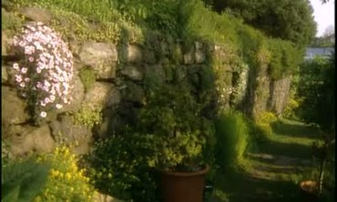 The Steps to Proper Crevice Gardening