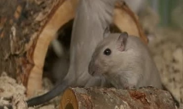 How to Choose the Best Rodent for Kids