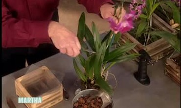 How to Grow Orchid Flowers in a Basket