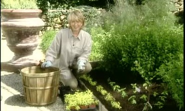 How to Plant a Kitchen Herb Garden Bed