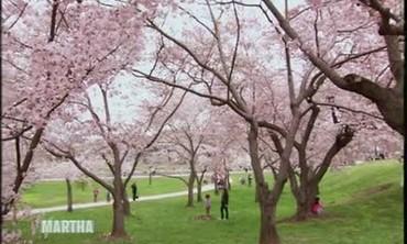 Japanese Cherry Blossom Festival in D.C.