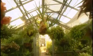 Profile of Wave Hill Garden Greenhouse