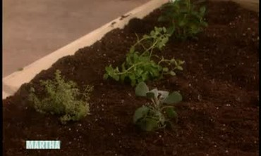 Tips to Plant A Successful Herb Garden