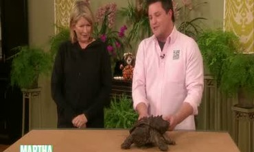 Wildlife Protection and Exotic Animals
