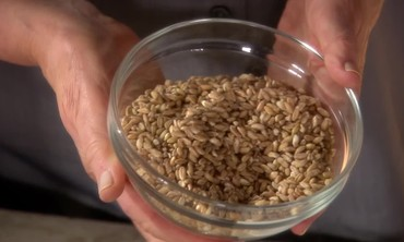 Grains for Gluten- and Wheat-Free Diets