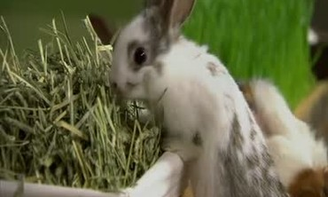 How to Best Feed Your Grass Eating Pets