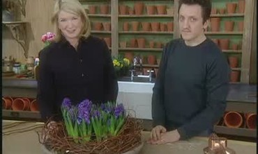 How To Make a Hyacinth Bulb Arrangement