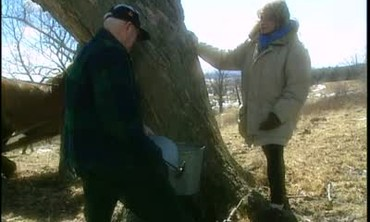 Maple Tapping for Delicious Maple Syrup
