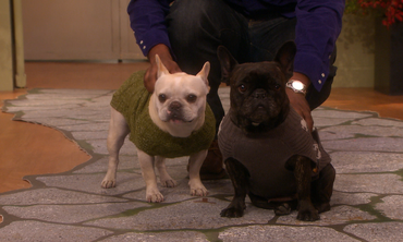 Martha Stewart Hosts a Dog Fashion Show