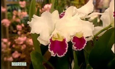 Orchid Varieties with Marc Hachadourian