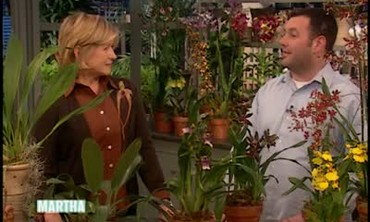 All About Orchids with Marc Hachadourian