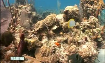Atlantis Resort's Blue Project Initiative