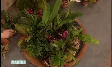 Living Centerpiece Made with Real Plants