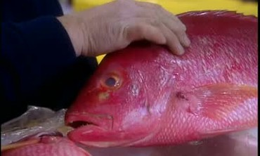 Choosing Fresh Seafood at the Fish Market