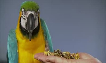 How To Make Sprouted Seeds for Bird Treats