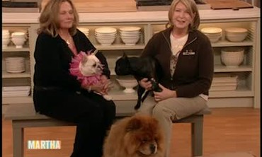 Suzanne Readmond Discusses French Bulldogs