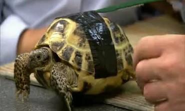 The Importance of UV Light in Tortoise Care