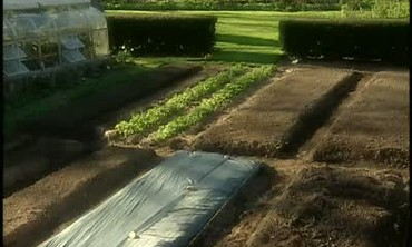 How to Solarize Soil For Healthy Crop Growth