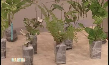 Jumpstart Your Garden with Mail Order Plants
