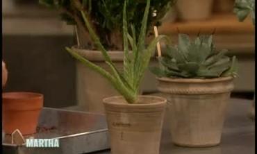 Plants That Can Survive Extreme Temperatures
