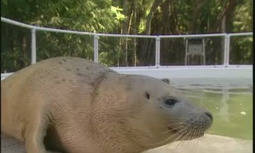 Wildlife Care Center Saving Harbor Seal Pups