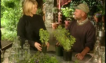 Brian McGowan Discusses Varieties of Baptisia