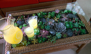 Learn & Do: How to Make a Terrarium Coffee Table