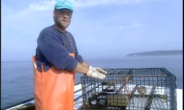 Catching Lobster in Maine