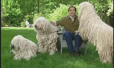 Marc Morrone Discusses the Komondor Dog Breed