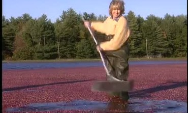 Martha Takes a Field Trip to a Cranberry Bog