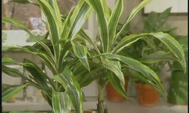 Houseplants that Filter and Purify Air in Homes