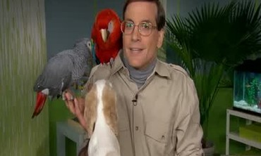 Marc Morrone Shares Tips on Traveling with Pets