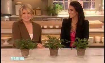Martha Stewart and Rory Tahari Answer Questions