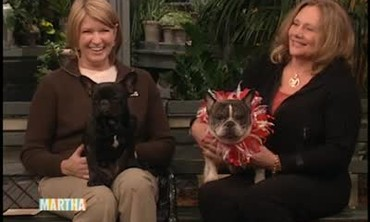 Suzanne Readmond Shares Tips on Owning Bulldogs