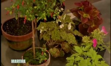 Dennis Schrader's Choices for Great Garden Plants